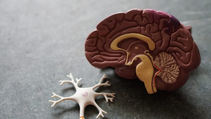 Areas that Alcohol Effects the Brain